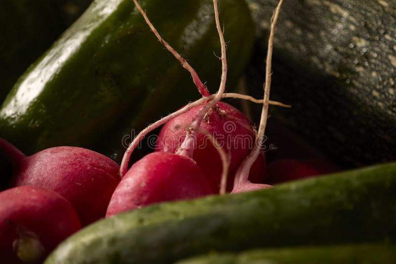 Raw vegetables of green and red color. royalty free stock image