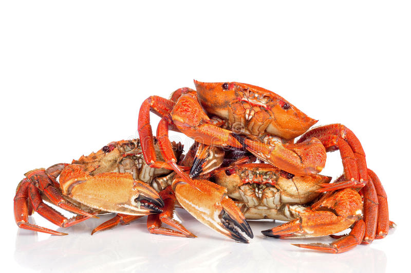 Raw velvet crabs. Some raw velvet crabs on a white background royalty free stock photos