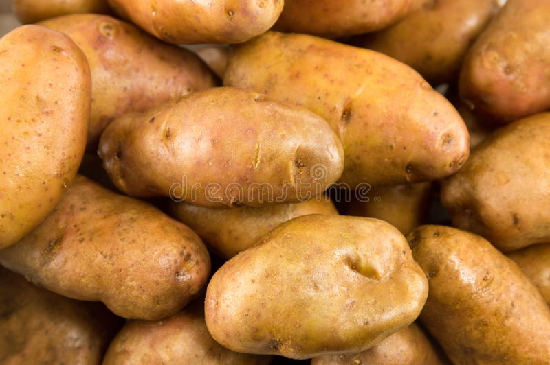 Download Raw Washed Potatoes Closeup Stock Photo - Image of agriculture, vegetable: 83720402