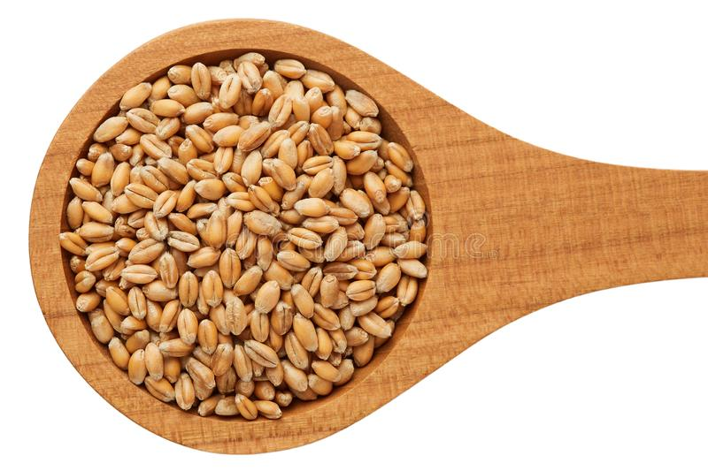 Raw wheat grain stock image