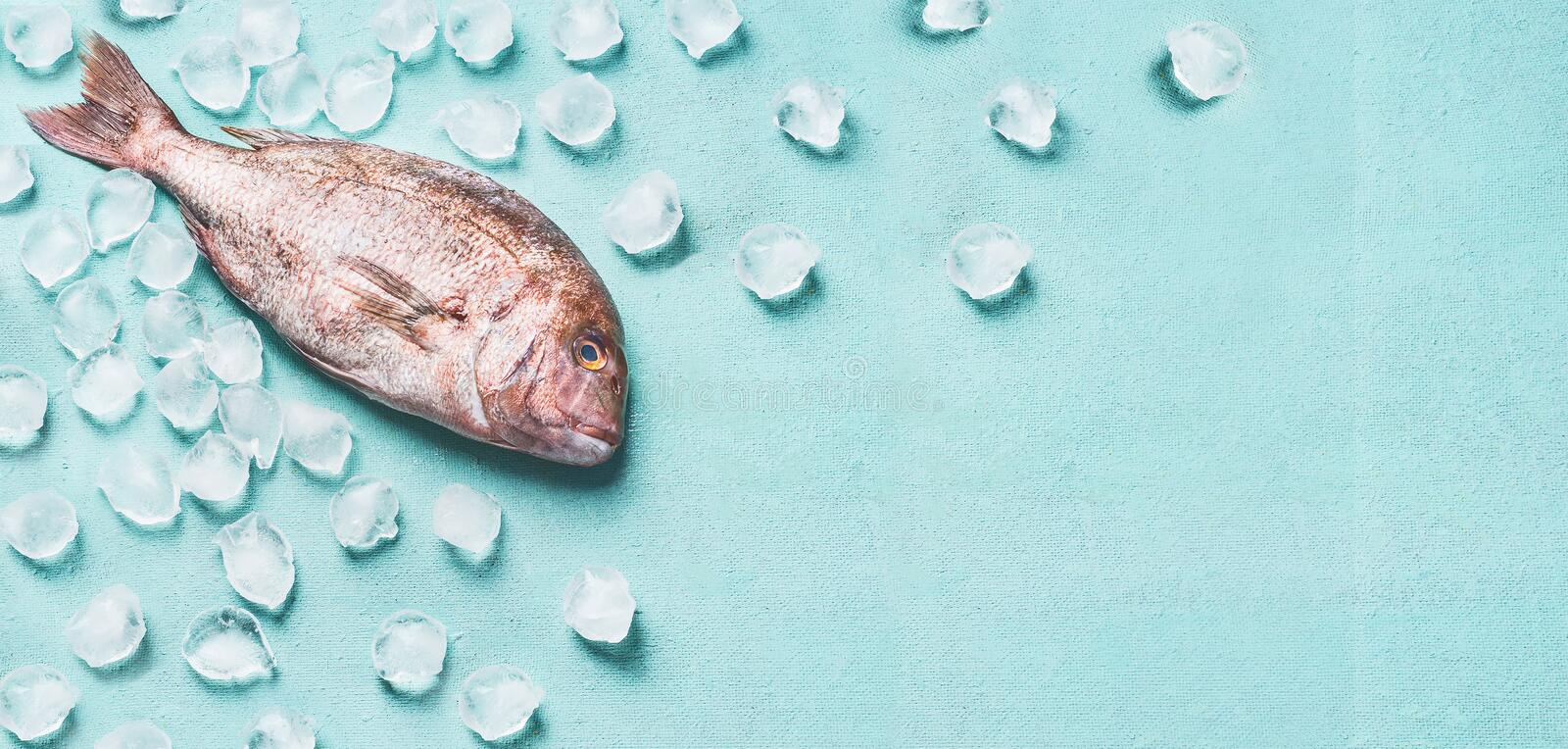 Raw whole fish on light turquoise background with ice cubes, top view. Seafood concept. Pink dorado. Food flat lay stock photos