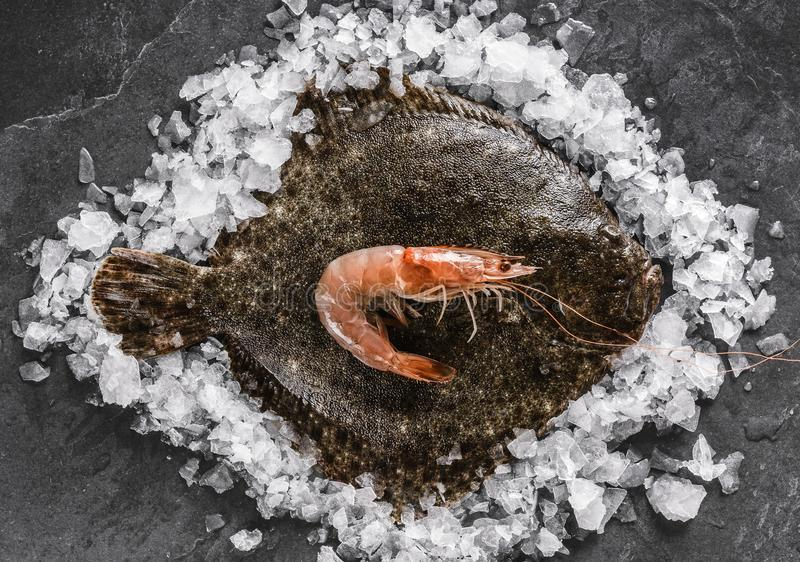 Raw whole flounder fish with shrimps on ice over dark stone background. Creative layout made of fish, top view.  royalty free stock photos
