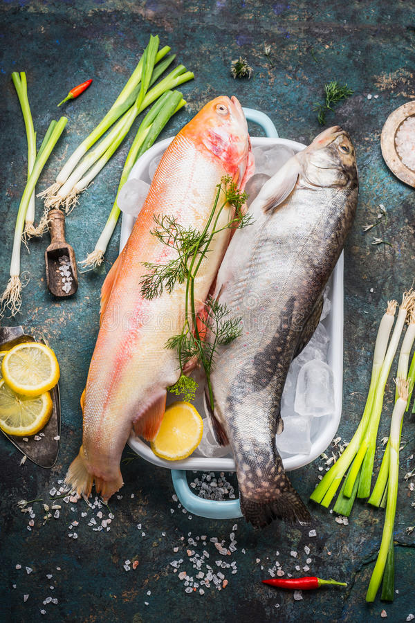 Raw whole trout fish and Gold Rainbow trout on dish in dish with ice cubes and fresh cooking ingredients on dark rustic backgroun royalty free stock photo