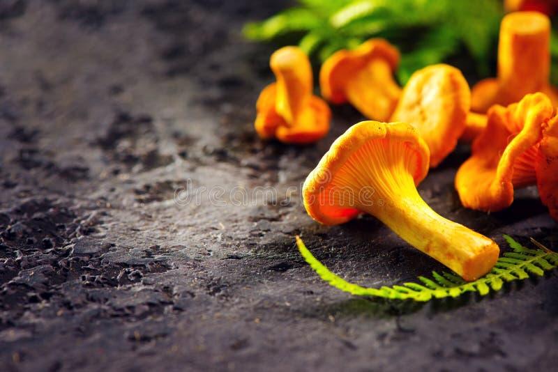Raw wild chanterelle mushrooms on dark old rustic table background. Organic fresh chanterelles background stock photo