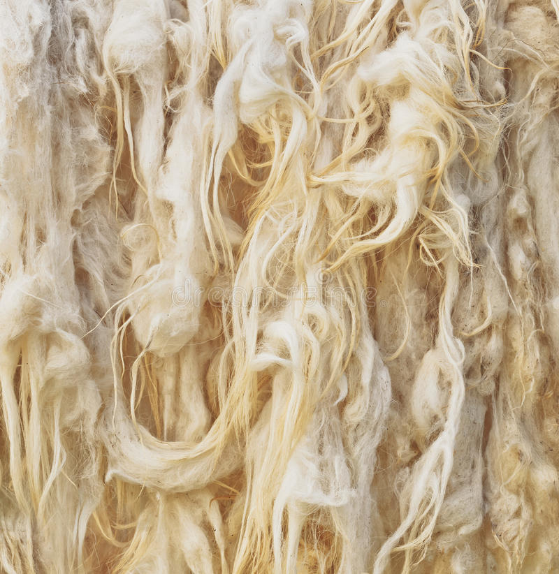 Raw wool. Background. Natural abstract stock image