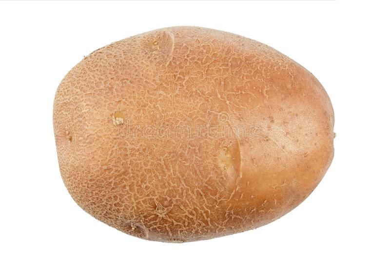 Raw young potato isolated. On white background. file contains clipping path royalty free stock photography