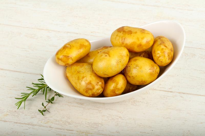 Raw young potato. With herbs royalty free stock photography