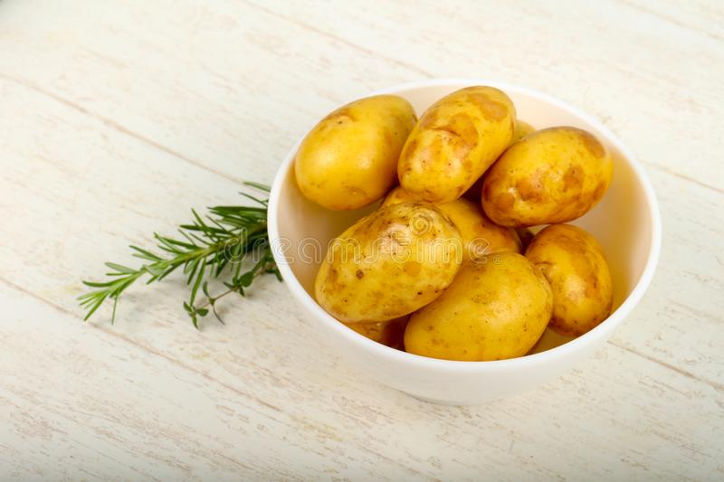 Raw young potato. With herbs royalty free stock images