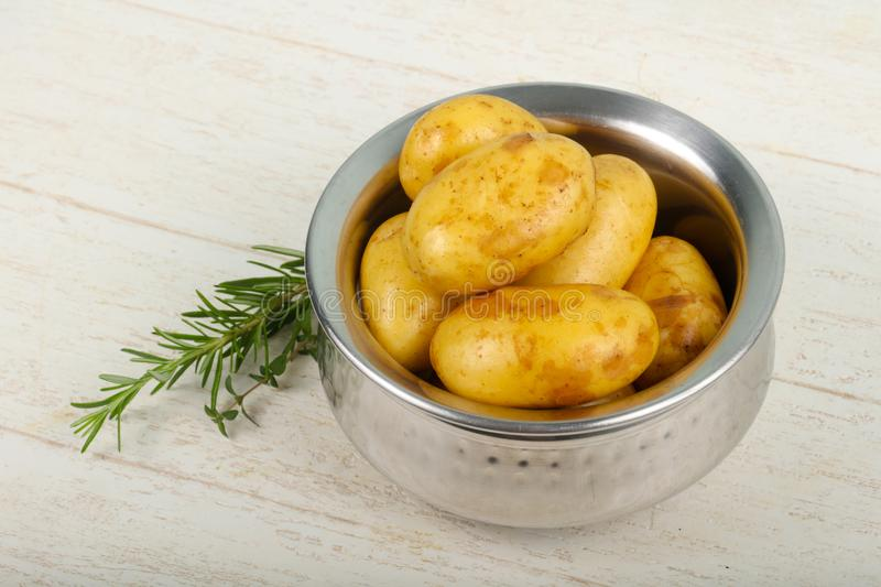 Raw young potato. With herbs stock images