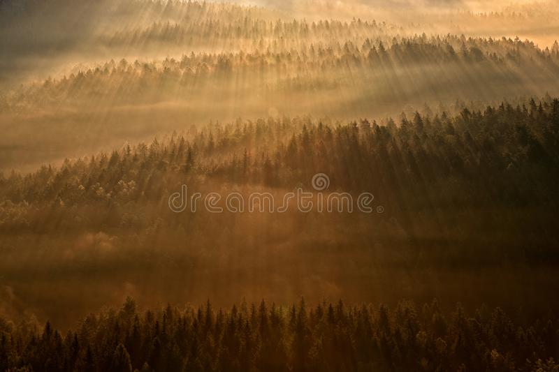 Ray beam of sunset light in wild nature. Spruce trees in the forest during morning sun, Kleiner Winterberg hill viewpoint in. Saxony Switzerland, Germany. Magic stock photo