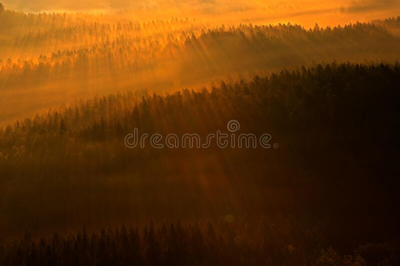 Ray beam of sunset light in wild nature. Spruce trees in the forest during morning sun, Kleiner Winterberg hill viewpoint in. Saxony Switzerland, Germany. Magic royalty free stock photography
