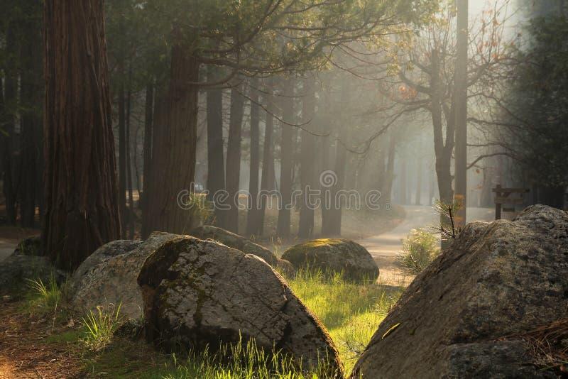 Ray De Luz Foto de Stock Royalty Free
