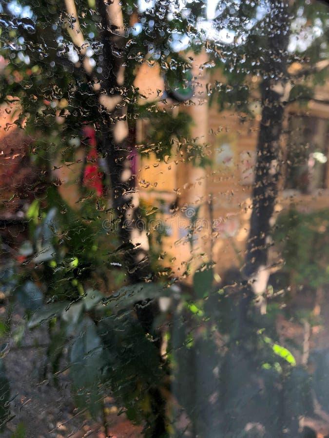 Ray del sole che passa tramite le foglie e che raggiunge la terra fotografia stock libera da diritti