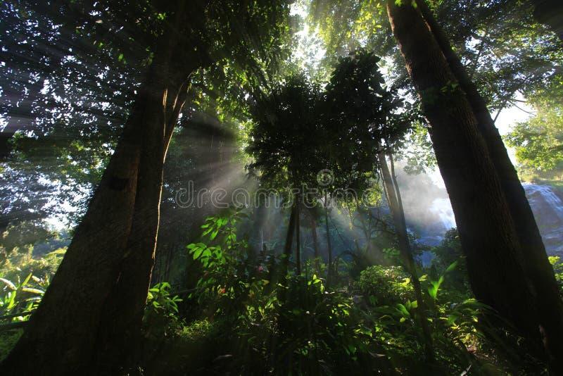 Ray des Lichtes durch Bäume lizenzfreies stockfoto