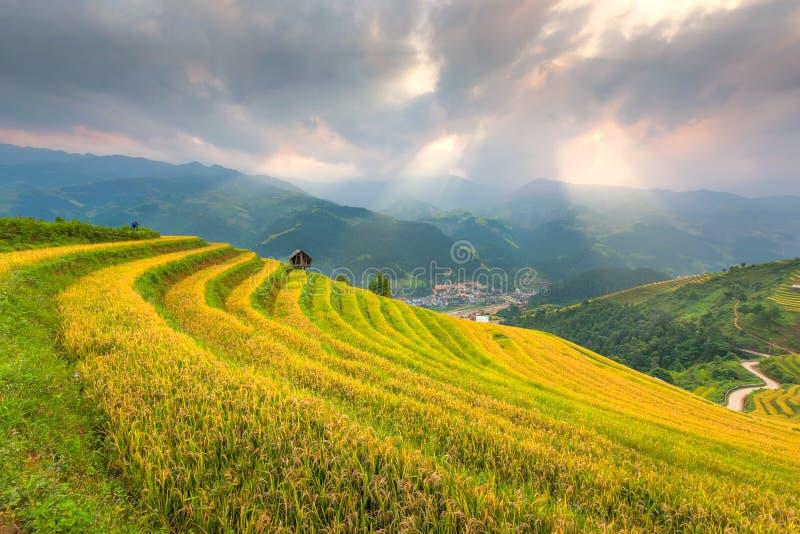 Ray des Lichtes und der schönen Naturreisfelder auf terassenförmig angelegtem von Vietnam Reisfelder bereiten die Ernte bei Nordw stockbilder