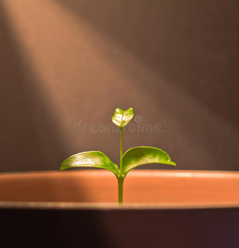 Download Ray of Life stock photo. Image of green, life, tree, flower - 29014088