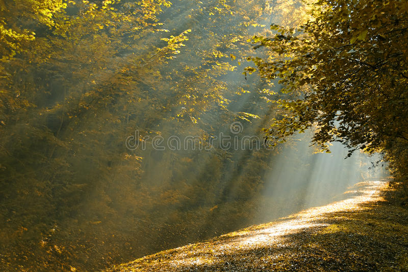 Ray of light stock image