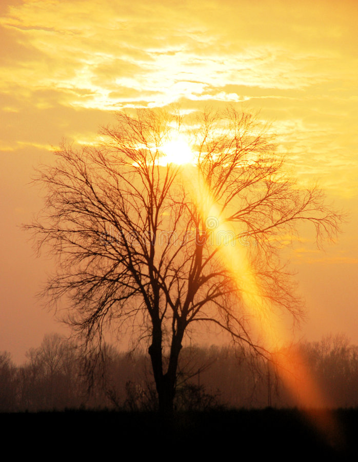 Download Ray of light stock image. Image of landscape, branch, sunlight - 8138767
