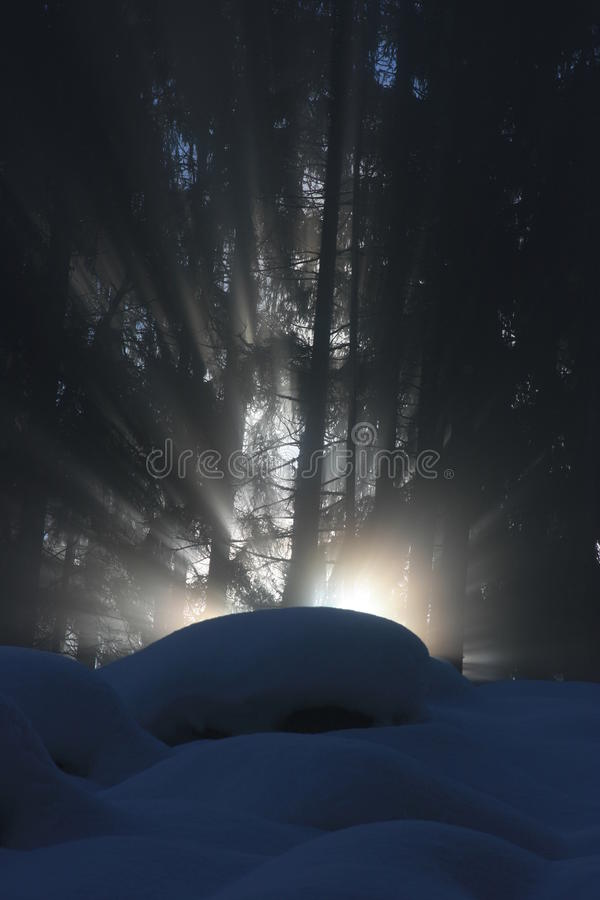 Ray of sunlight through forrest royalty free stock photography
