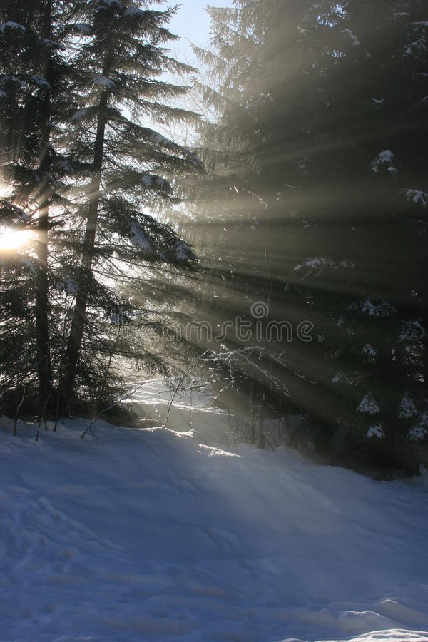 Ray of sunlight throught forrest royalty free stock photography