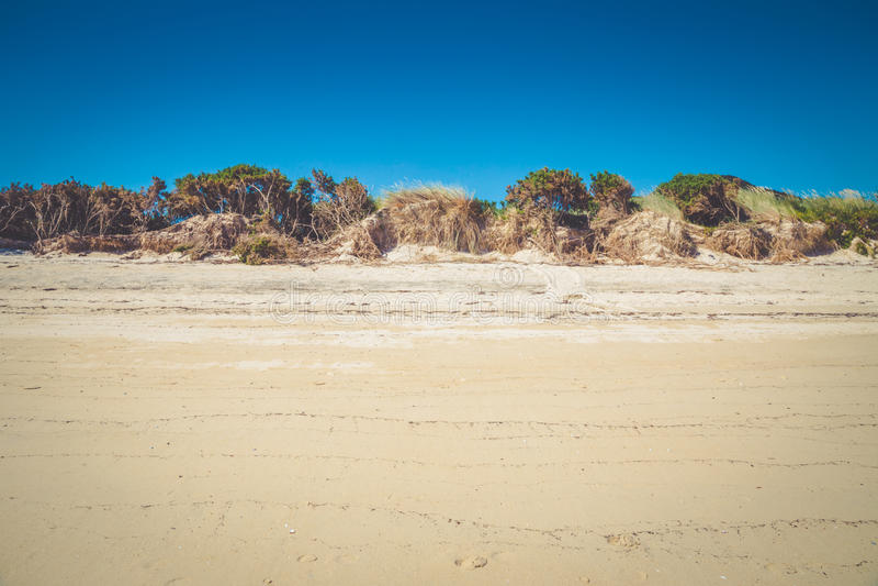 Raya de la duna y de las plantas blancas de arena en la playa en Abel Tasman foto de archivo libre de regalías