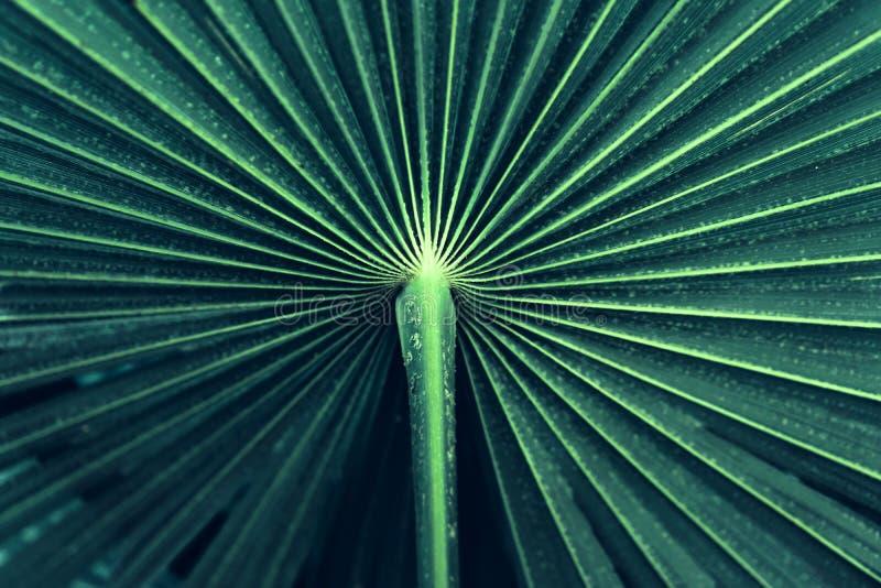 Rayas azules abstractas de la hoja de palma tropical, foto de archivo