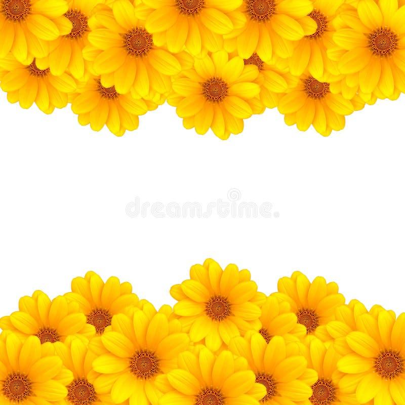 Rayas de la flor fotografía de archivo