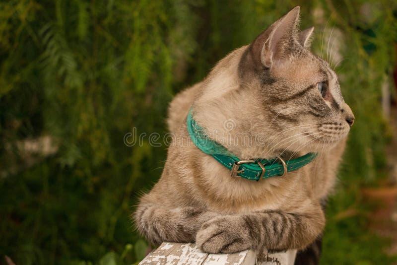 Rayo, Cat modelo fotos de archivo