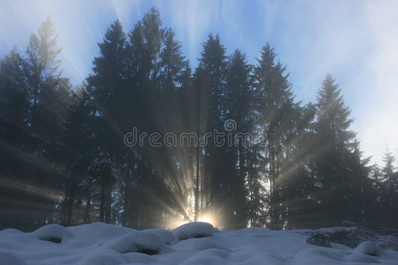 Rayo de la luz del sol con la más forrest imagen de archivo libre de regalías