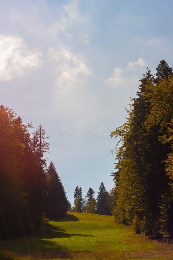 Rayo de sol enigmático sobre un prado verde y abetos en otoño foto de archivo libre de regalías