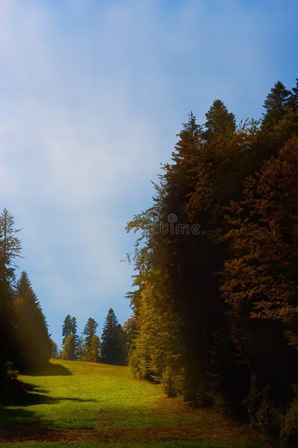 Rayo de sol enigmático sobre un prado verde y abetos en otoño fotografía de archivo