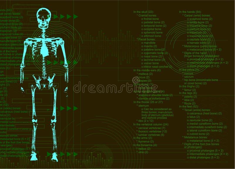 Rayo del cuerpo humano X ilustración del vector
