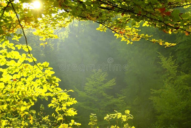 Rayon de lumière photo stock