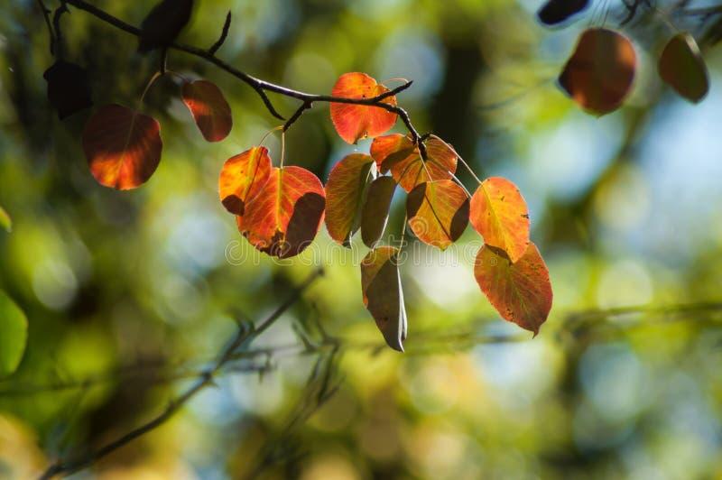 rayon de lumière dans des feuilles automnales image libre de droits