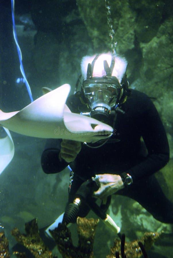 Rayon de plongeur et de piqûre image libre de droits