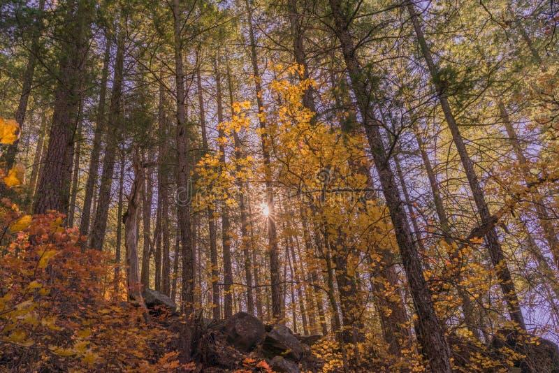 Rayon de soleil par Autumn Trees photos libres de droits