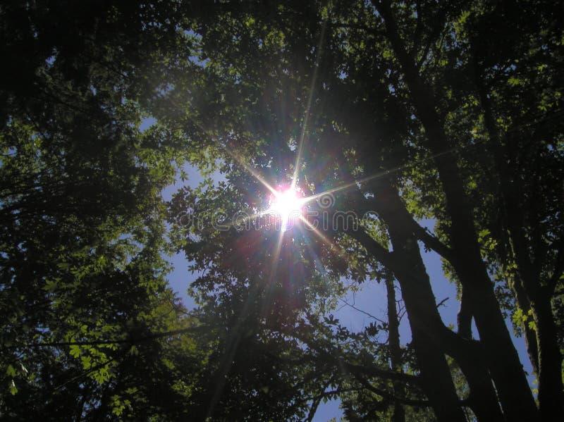 Rayon De Soleil Par Des Arbres Images stock