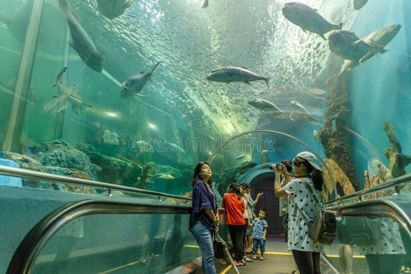 Rayong/Tailândia - 13 de abril de 2018: Os visitantes olham ao redor e veem várias vidas marinhas bonitas no aquário de Rayong do imagens de stock royalty free