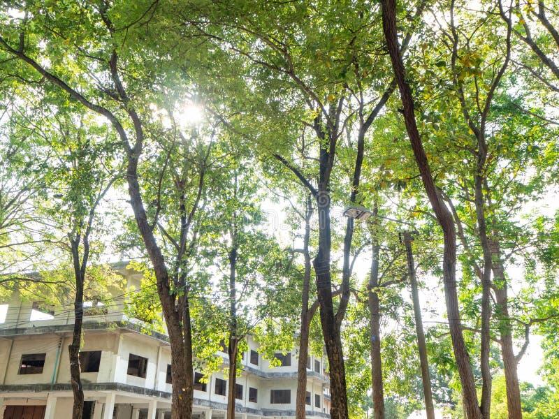 Rayong Tailandia de Sophon Temple del parque del ?rbol foto de archivo