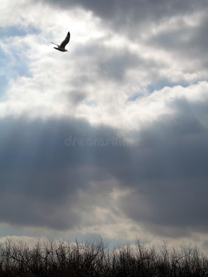 Download Rayons célestes image stock. Image du faucon, nuageux, rayons - 85423