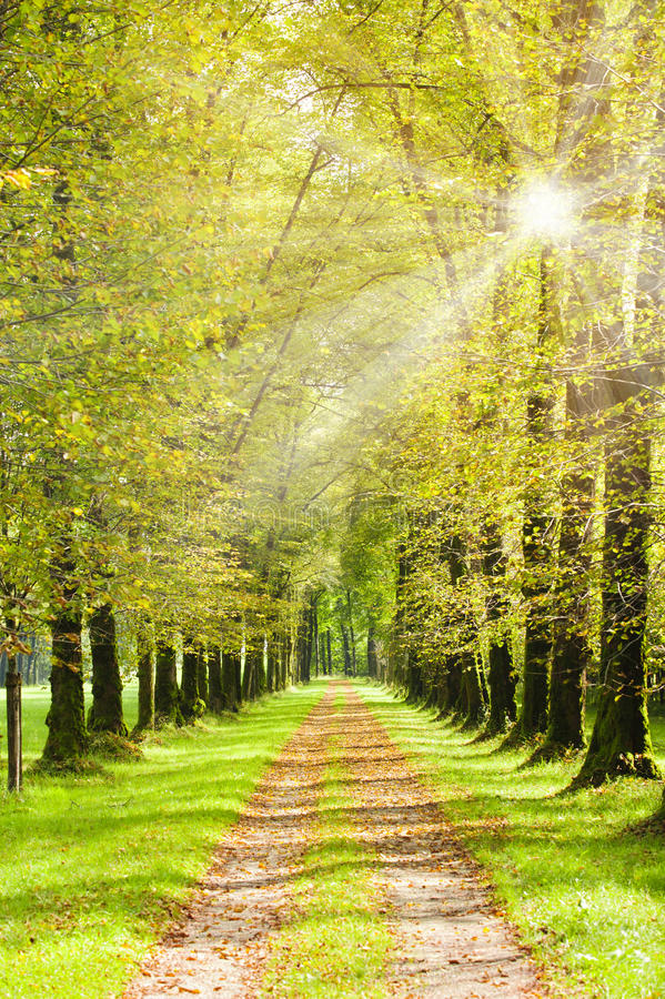 Rayons d'allée et de soleil d'arbre images stock