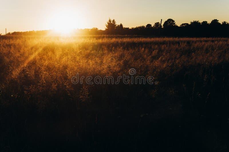 Rayons de coucher du soleil au champ d'été pré sous le soleil étonnant beau images stock