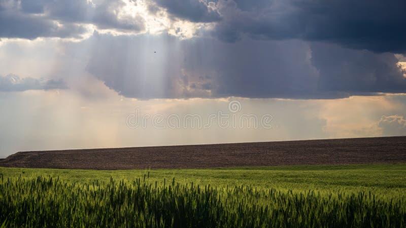 Rayons de Dieu dans la fin de l'après-midi de Palouse photographie stock