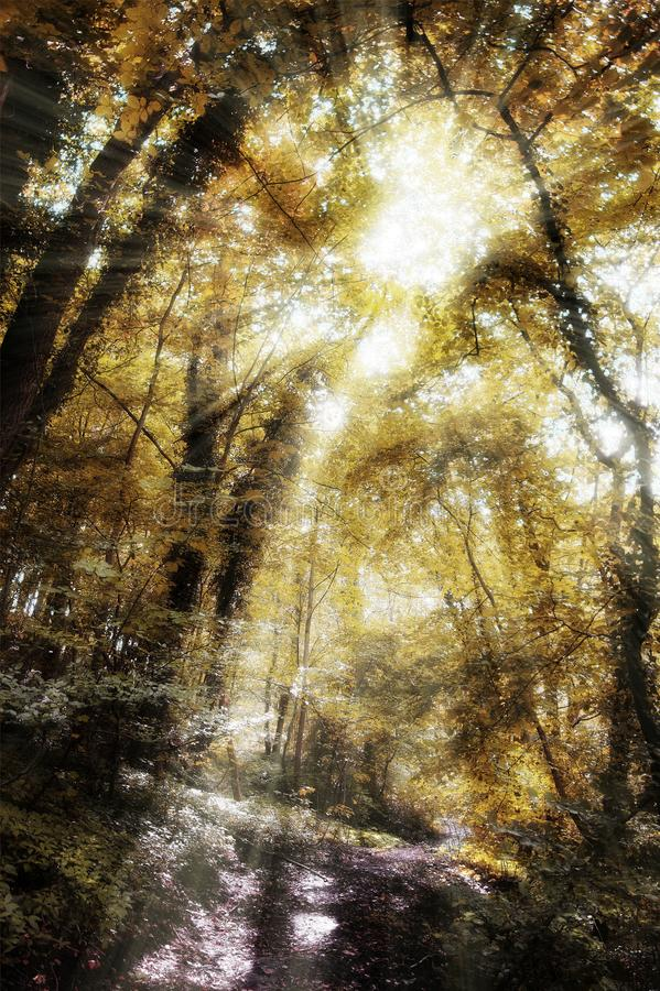 Rayons de Forest Sun photographie stock