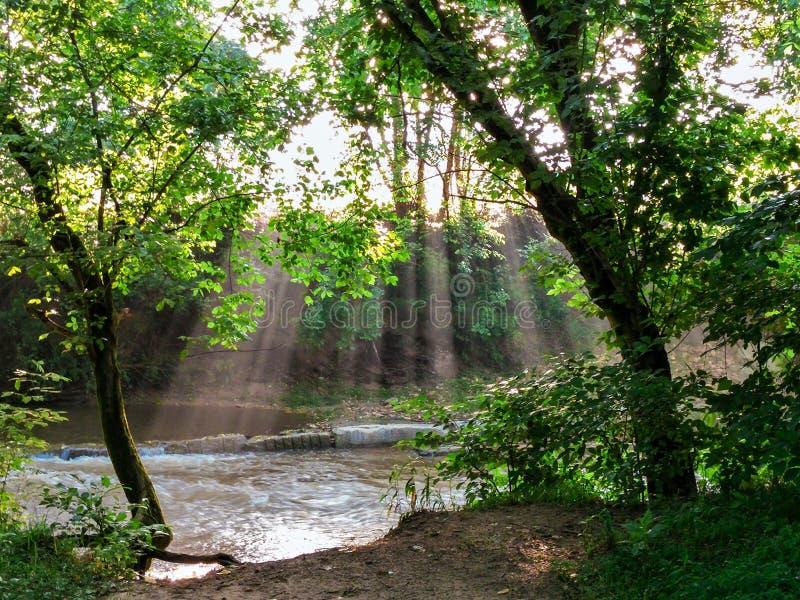 Rayons de lumière du soleil venant par des arbres au-dessus de rivière photo libre de droits