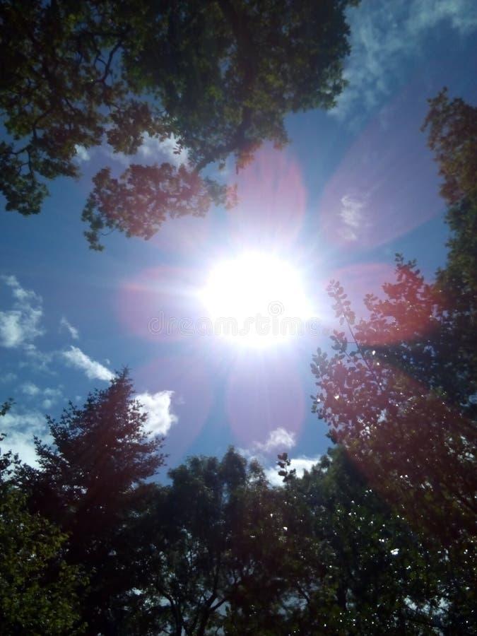 Rayons de soleil images libres de droits