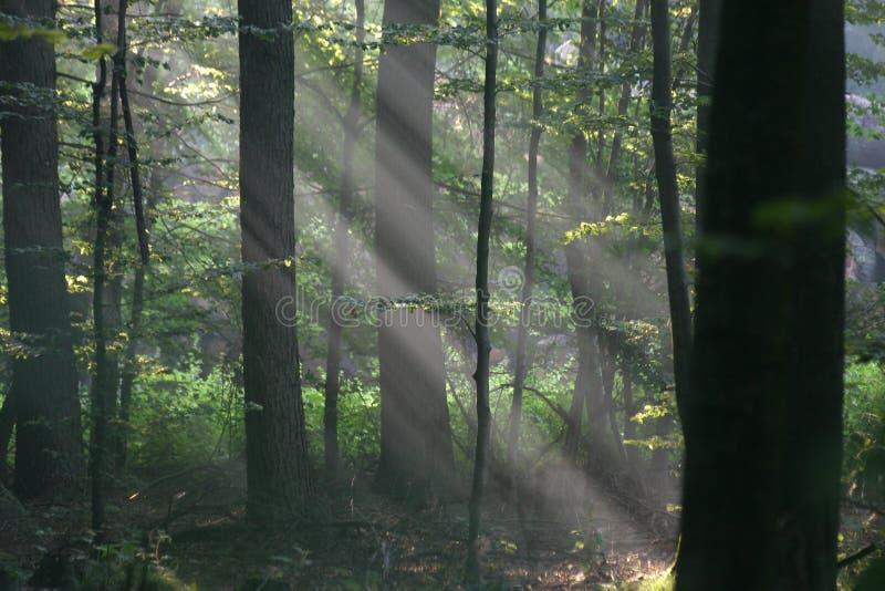 Rayons de soleil photos libres de droits