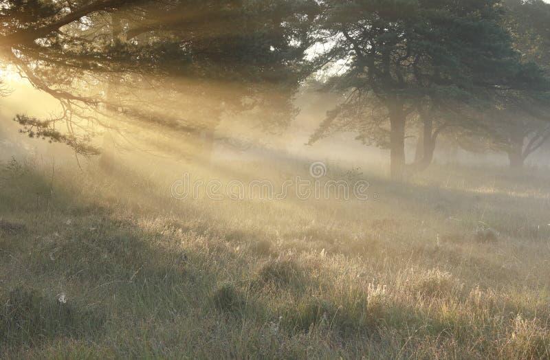 Rayons de soleil d'or dans le matin brumeux d'automne photographie stock