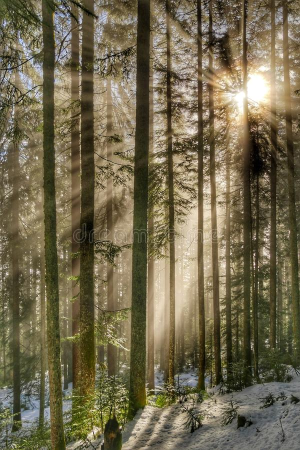 Rayons de soleil dans la forêt photo libre de droits