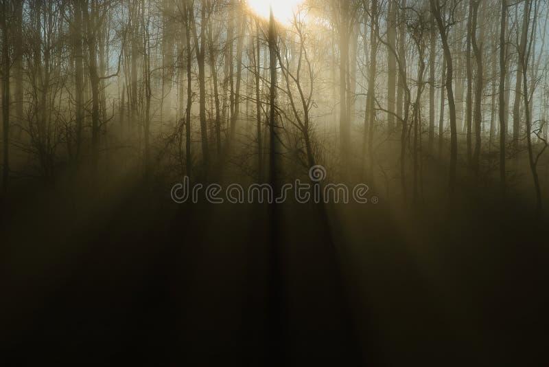 Rayons de soleil dans tous les bois brumeux photographie stock libre de droits